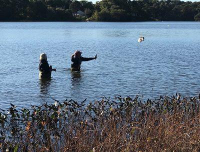 Friends of Chatham Waterways Cyanobacteria Testing