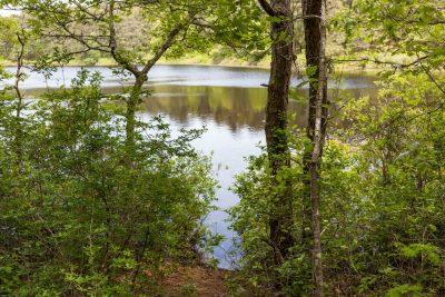 Friends of Chatham Waterways Marys Pond
